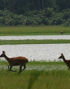 Special Wildlife Tour India