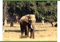 Elephant Photographic Safari