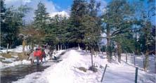 Shimla, Kullu & Manali