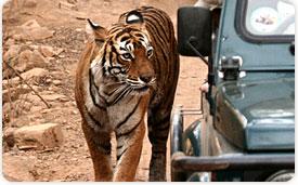 Bandhavgarh Tourism
