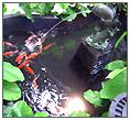 Gadern Aquarium